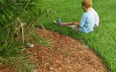 5 Reasons to Add Mulch to Your Landscaping